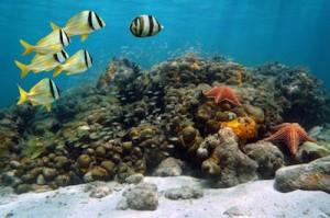 world-oceans-day.jpg.adapt.945.1