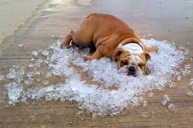 dog on ice