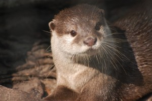 Jay the Otter