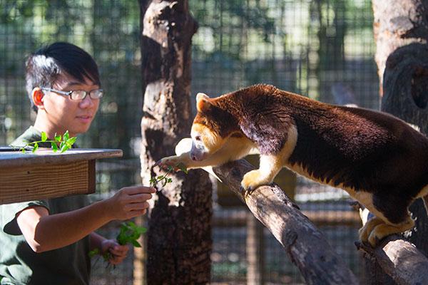 man feeds animal at zoo