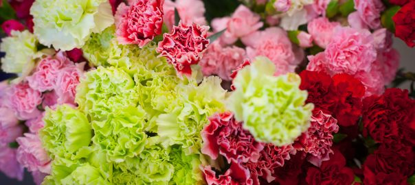 Close up photo of carnations