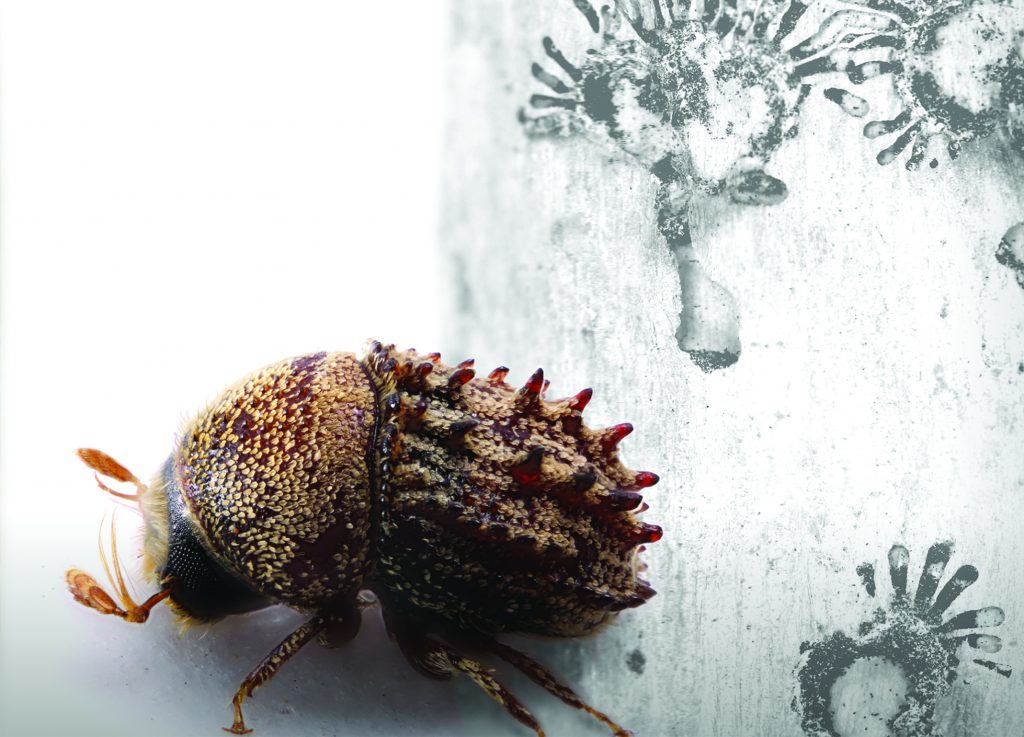picture of a bark beetle - SF Art Gallery Exhibit